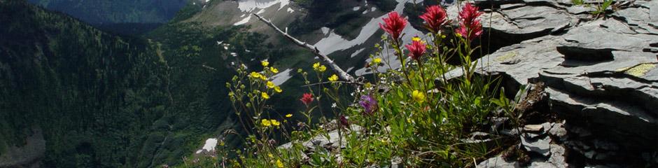 Alpine Garden Club Banner
