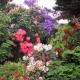 Back_Yard_SAM-0637.jpg
