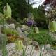 Fritillaria_acmopetata.jpg