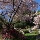 Front_garden_(3).jpg