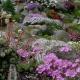 Moraine-garden.jpg