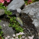 Rock-garden-visitor-DS.jpg